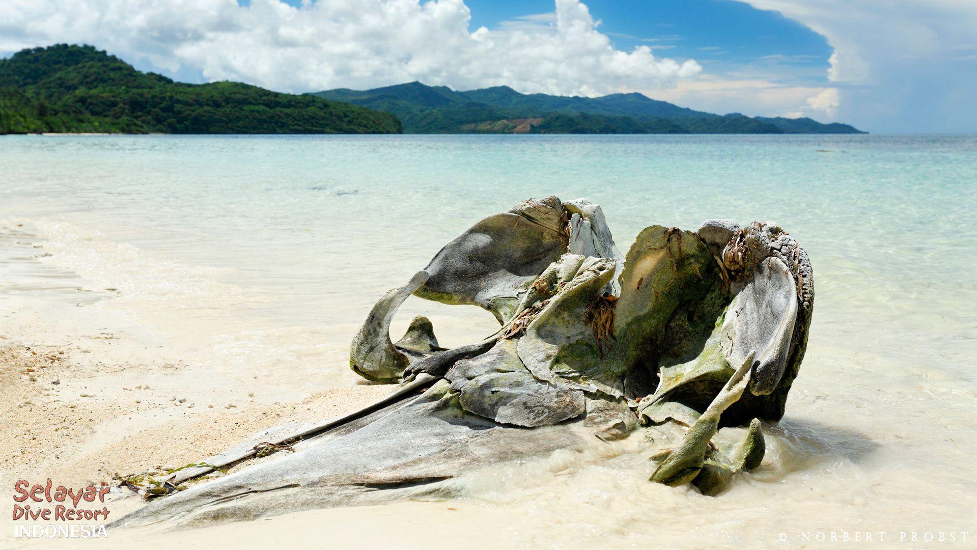 Private Beach Indonesia whale skull