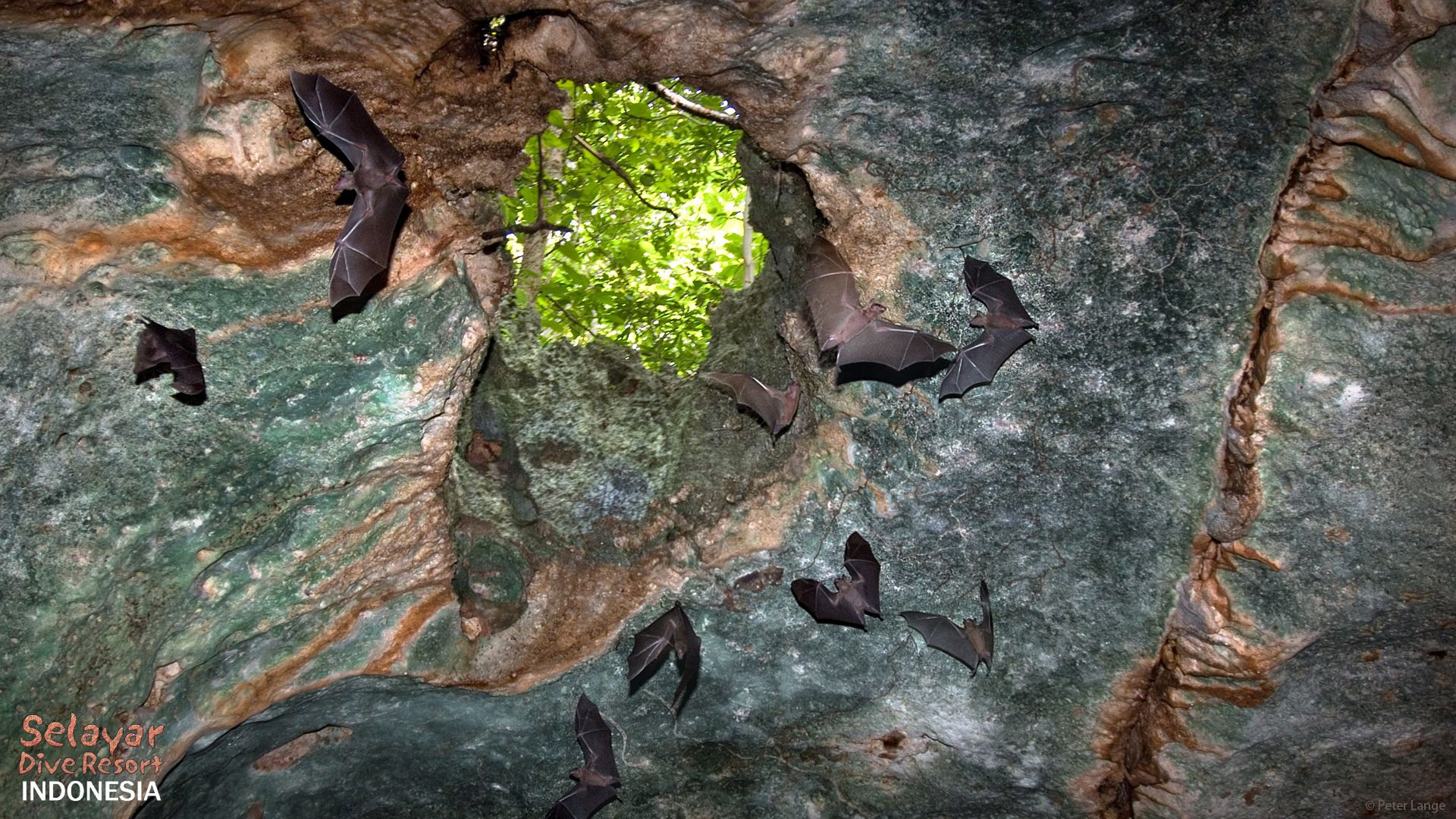 Bat Cave Sulawesi Eco Resort Indonesia