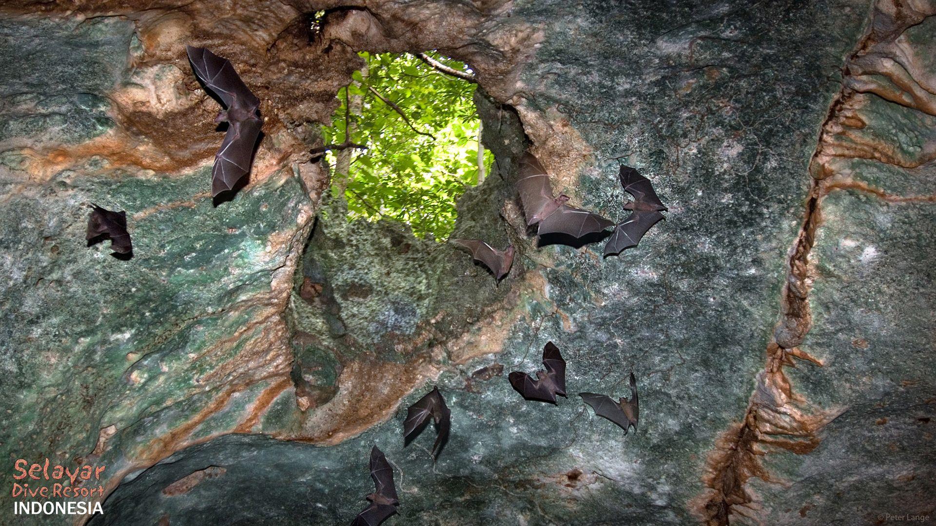 Bat Cave Sulawesi Eco Resort Indonesia