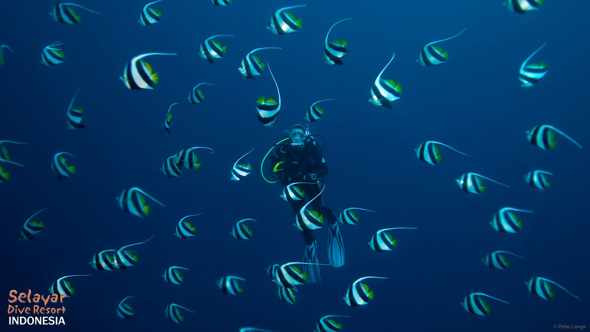 Schooling Fish Indonesia South Sulawesi