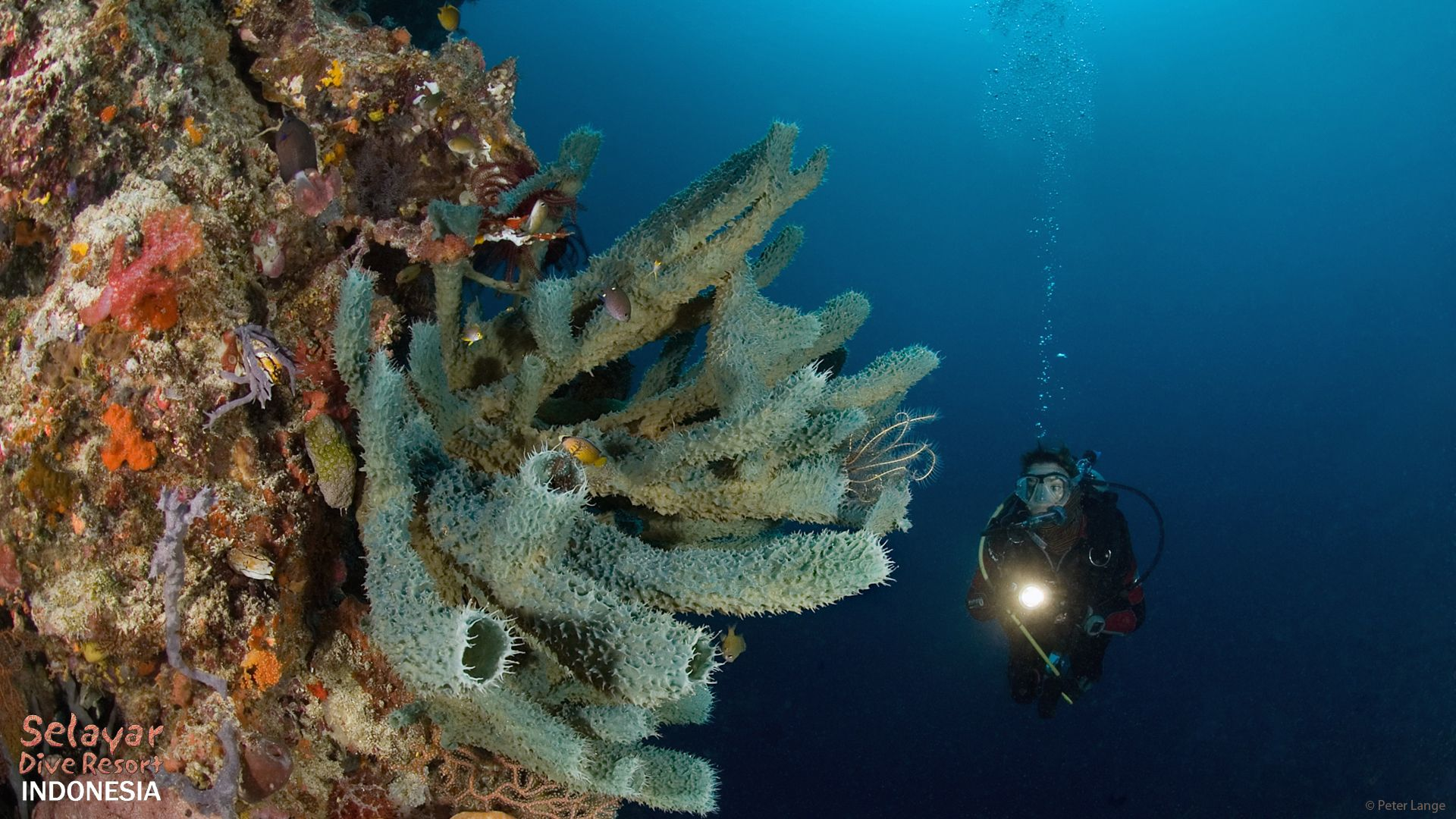 deep diving indonesia sulawesi