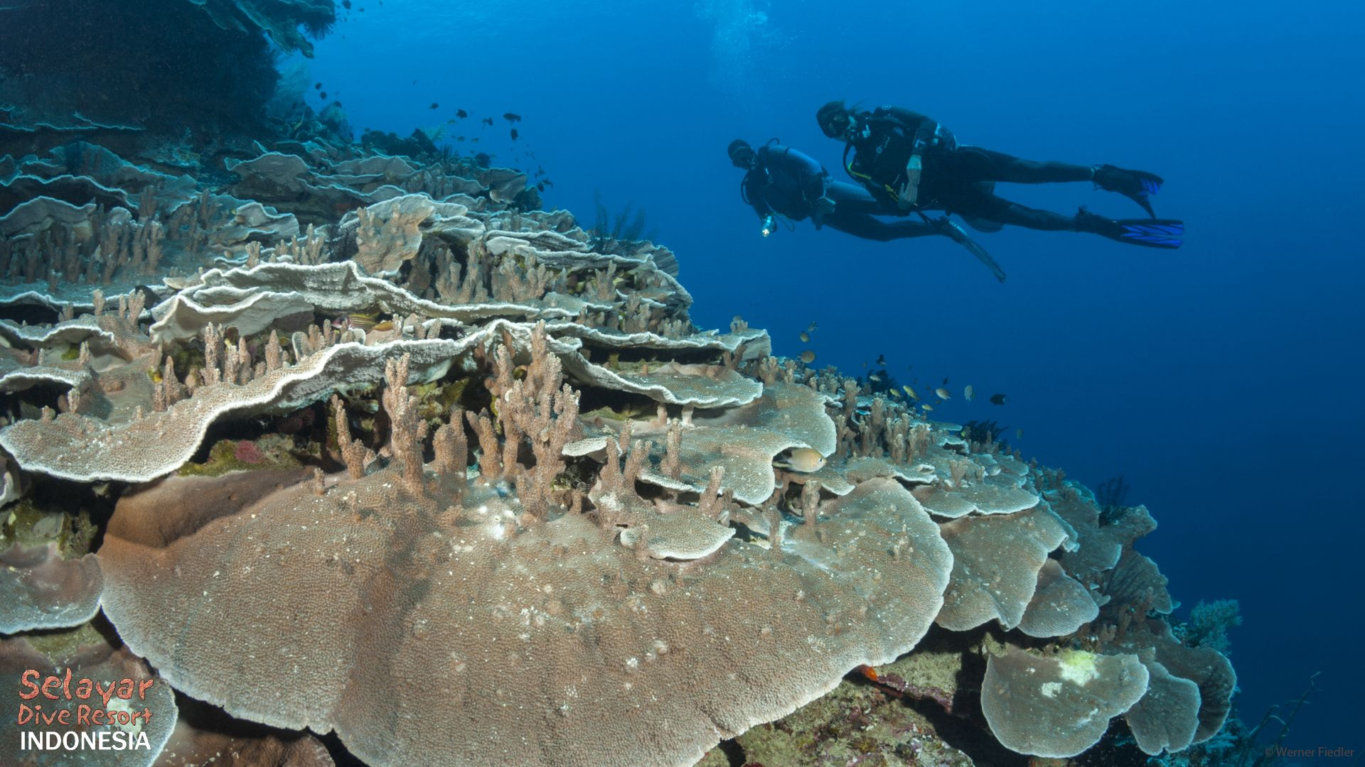 dive holiday sulawesi indonesia