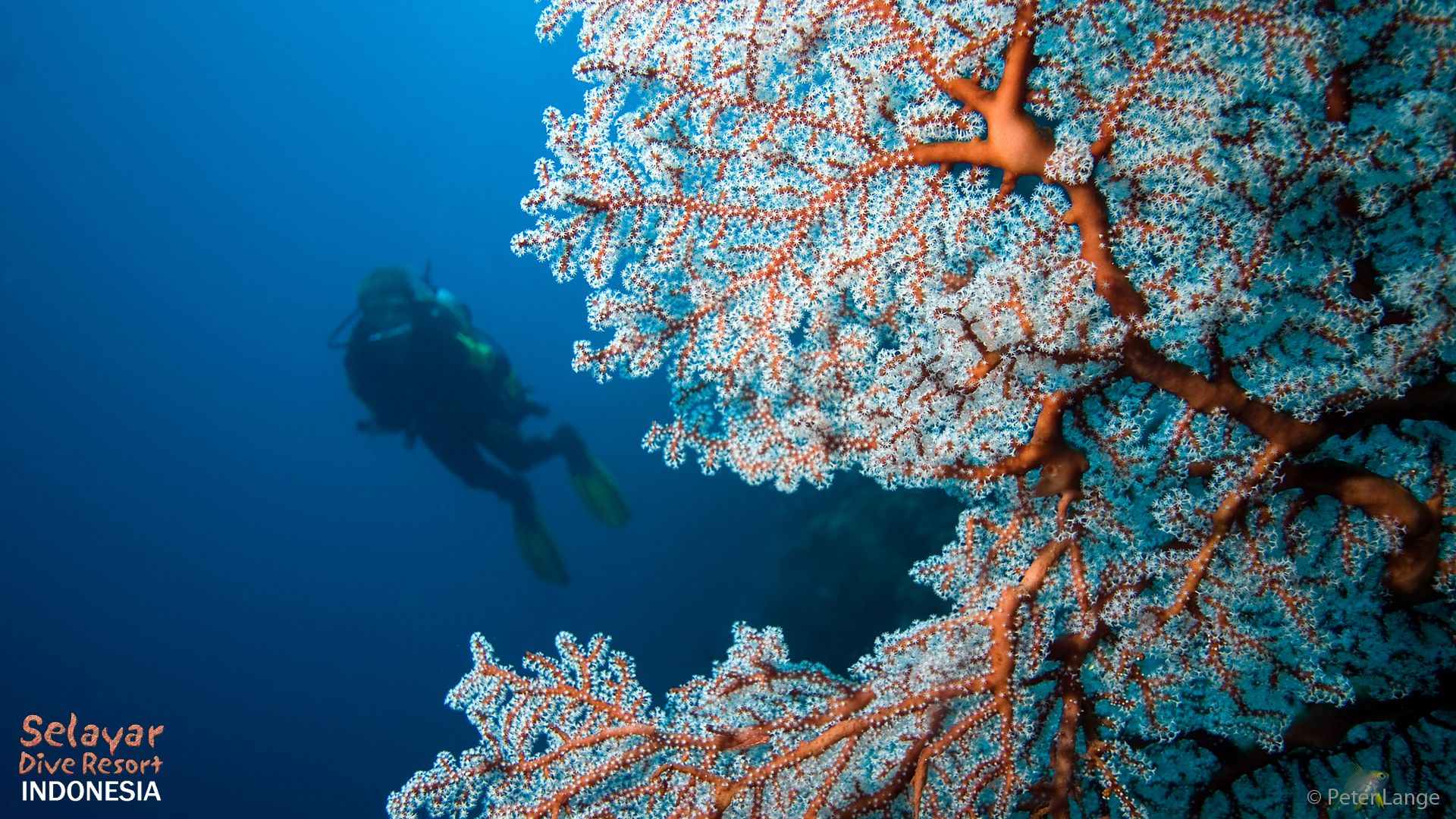 Dive Indonesia South Sulawesi