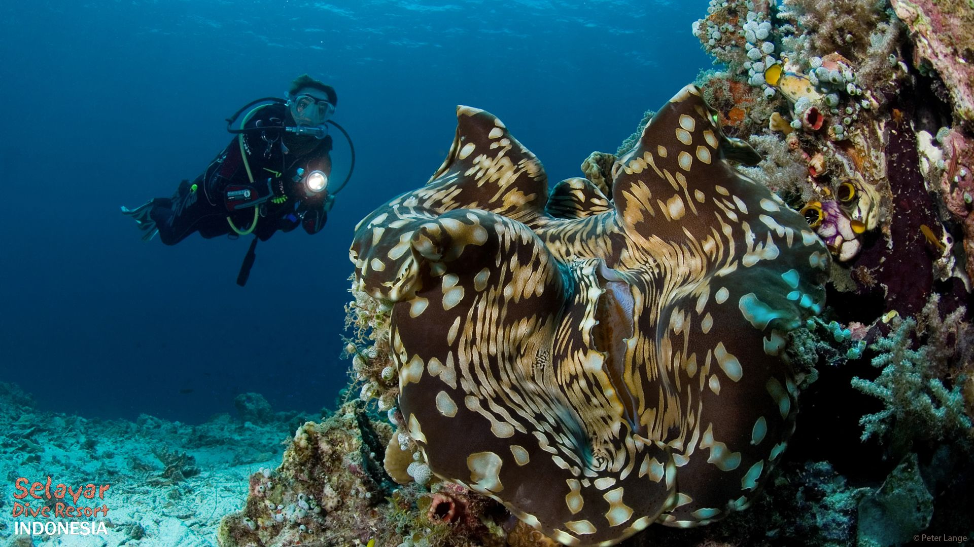 diving holiday Indonesia South Sulawesi