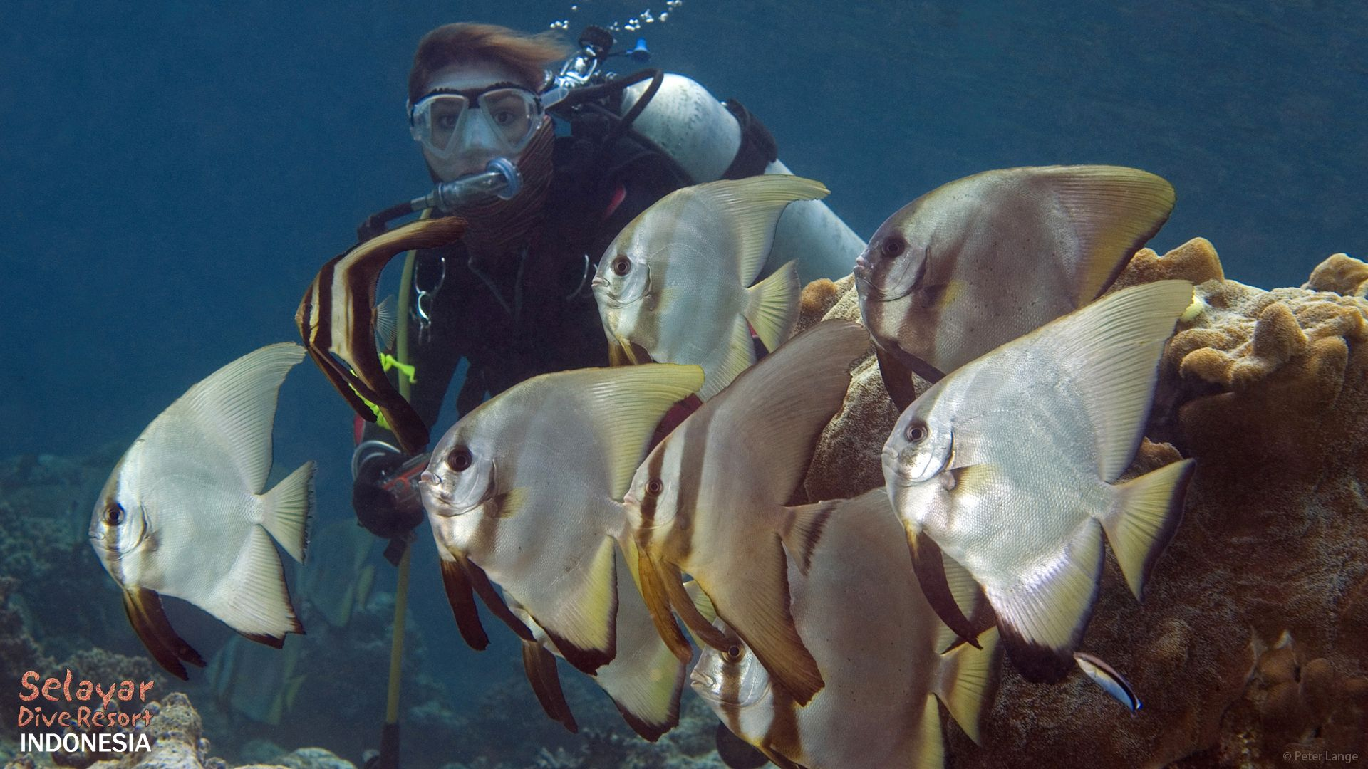 Bat Fish diving Indonesia