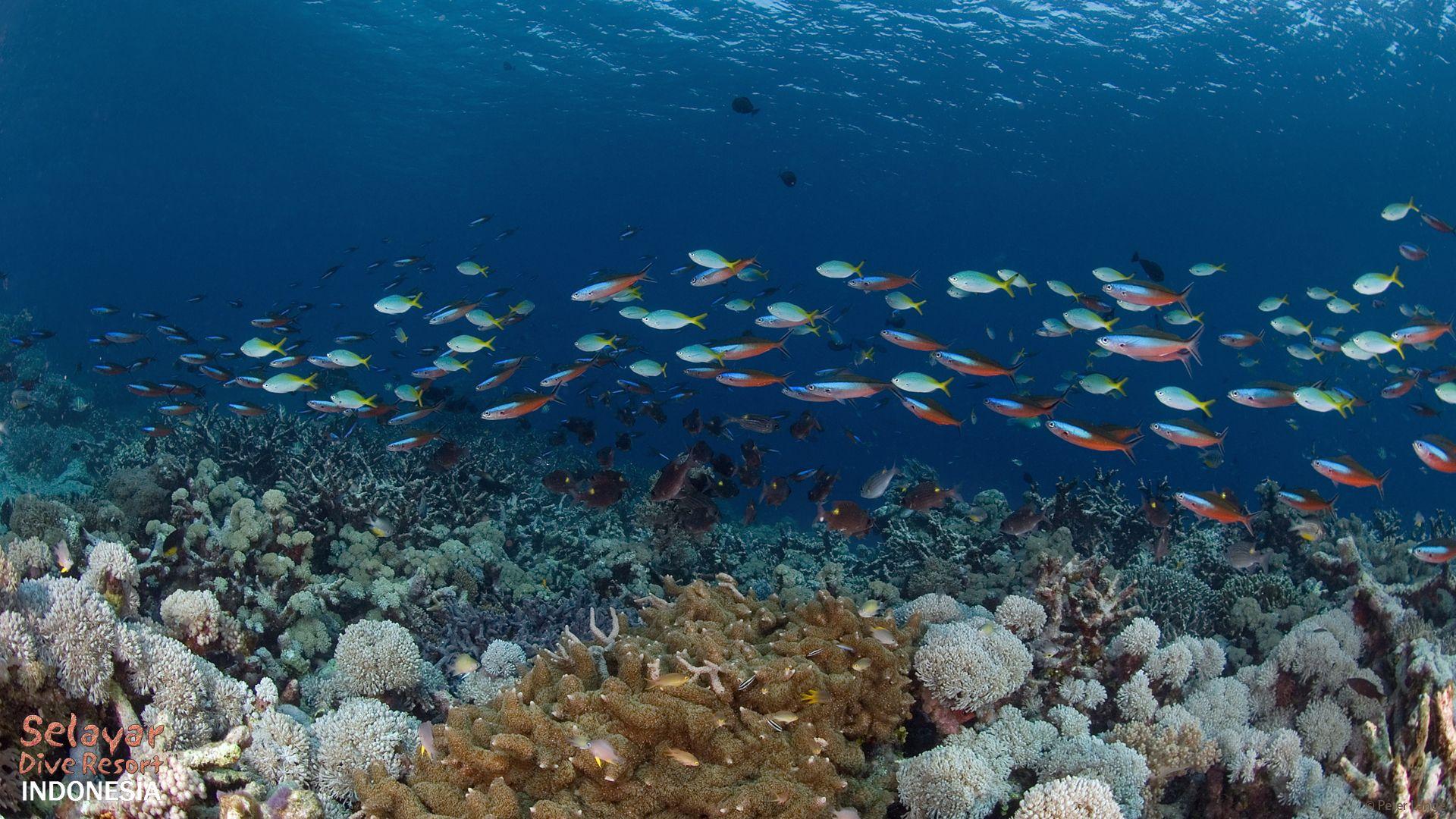 diving wakatobi like in indonesia resort