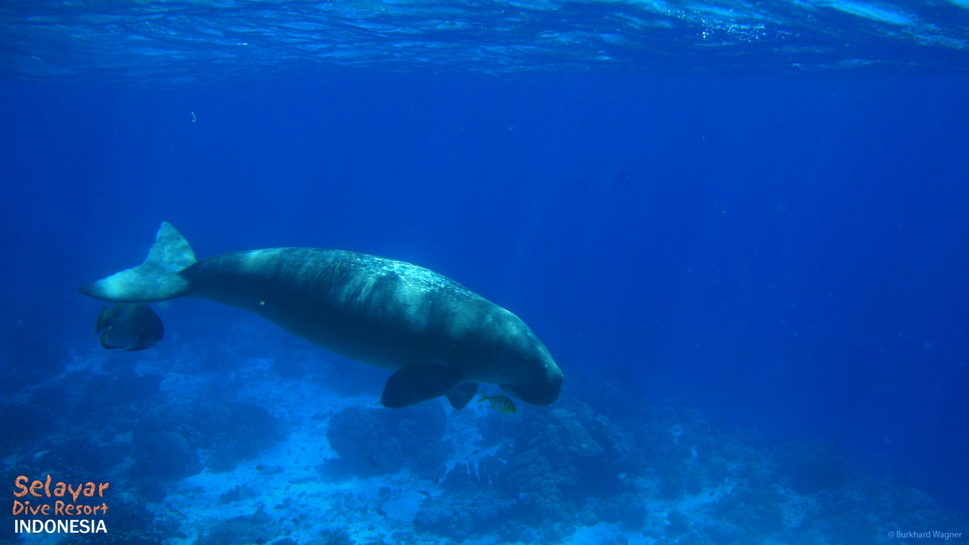 Dugong dive Eco Resort Sulawesi