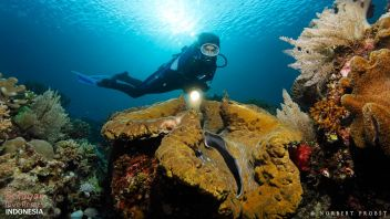 Giant Clam diving Indonesia South Sulawesi