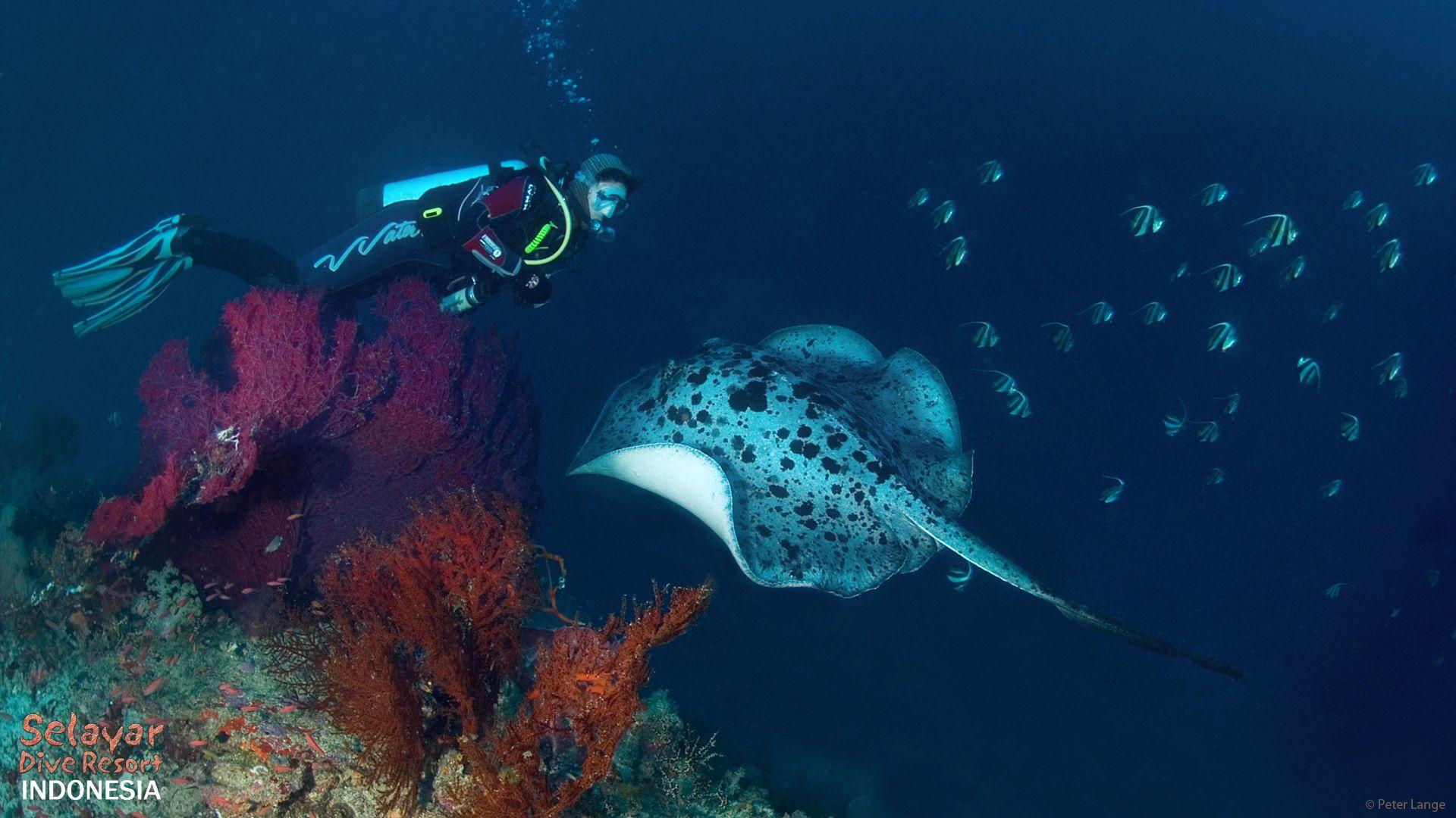 dive like in wakatobi resort
