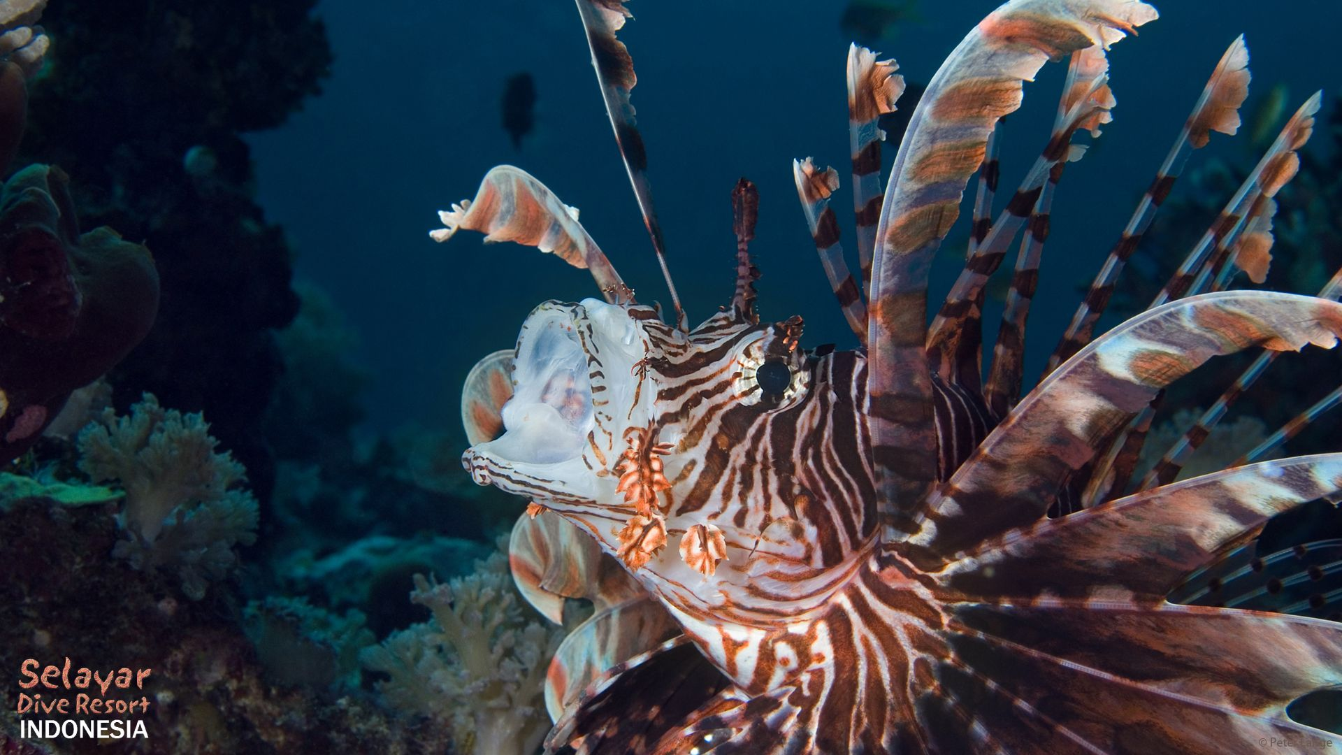 lionfish diving South Sulawesi