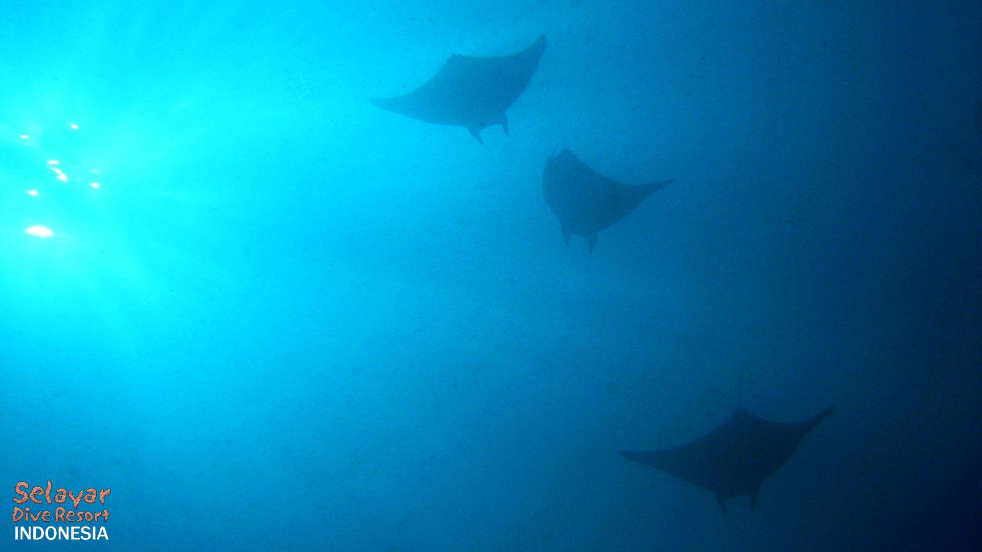 Marine park diving