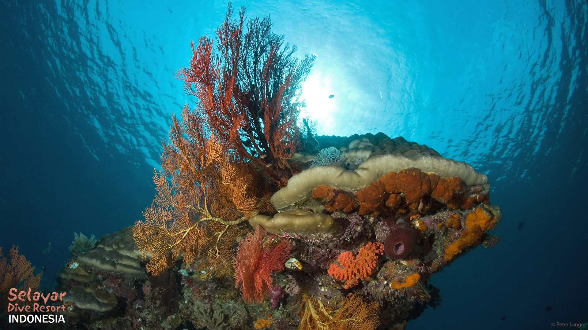 marine park Indonesia Sulawesi