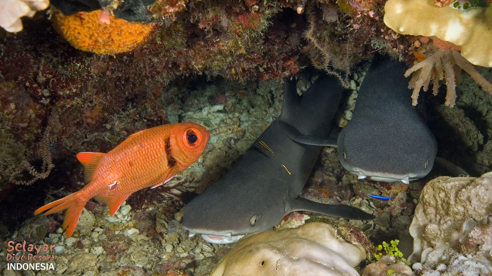 sharks diving Eco Resort