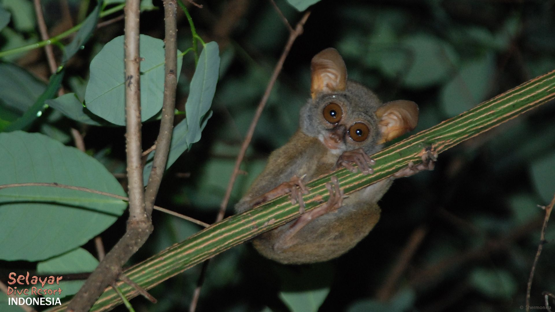 Eco beach resort Indonesia Tarsier