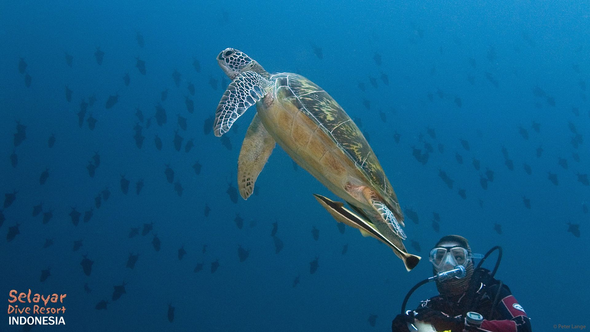 Turtle diving Sulawesi Eco Resort